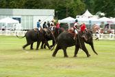 Elephant polo games racing. — Stockfoto