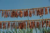 Meats drying in the sun . — Stock Photo
