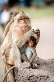 Monkey mother and her baby. — Stock Photo