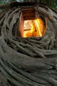 Old root tree around ancient Thai church. — Stock Photo