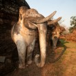 Elephant statue at pagoda in ancient temple . — Stock Photo #63069859
