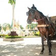 Horse carriage in Lampang city, Northern of Thailand. — Stock Photo #63935467