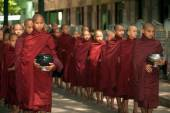 Row of Buddhist Monks waiting lunch  in Myanmar. — Stockfoto