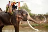 Felicidade de elefante com água após o desfile de ordenação no elefante — Fotografia Stock