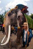 Ordination parade on elephant's back Festival. — Stock Photo