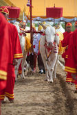 The Royal Plowing Ceremony . — Fotografia Stock