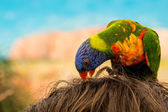 Colorful parrot on head — Stock Photo