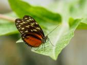 Spotted butterfly on leaf — Stock Photo