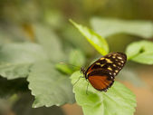 Simple butterfly on a leaf — Stock Photo