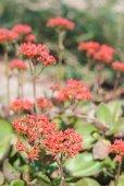 Gartenblumen — Stockfoto