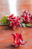 Roselle Fruits — Stock Photo