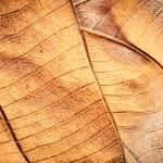 Dry leaf — Stock Photo #63646819