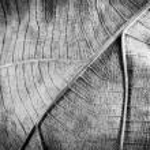 Dry leaf — Stock Photo #63647173