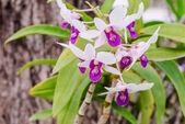 Weisse orchideen — Stockfoto