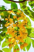 Natursekt-blumen — Stockfoto