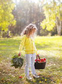 Child holding basket with apples walking in autumn forest — Stock Photo