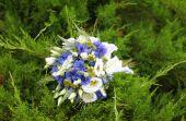 Unusual bouquet flowers in garden — Stock Photo