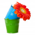 Orange gerbera daisy flower and multicolor buckets — Stock Photo #52326405
