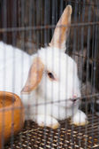White Rabbit in the Cage — Stock Photo