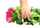 Pink rose in hand — Stock Photo