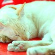 So cute yellow cat sleeping — Stock Photo #71049331
