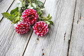 Freshly cut asters on wooden background — Stock Photo