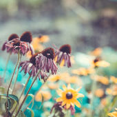 Flower background in the summer garden — Stock Photo