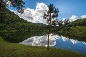 Reflection tree and sky — Foto de Stock