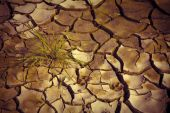 Desertification and famine — Stock Photo