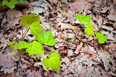 Small plants just born in the undergrowth. New life concept imag — Stock Photo