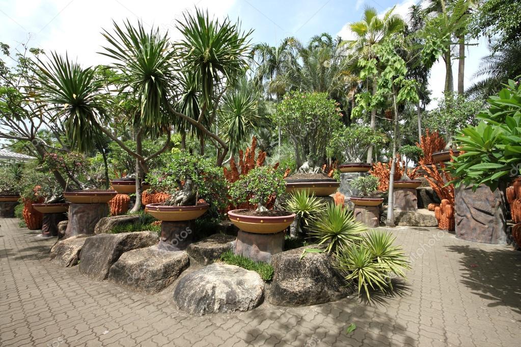 flores tropicais jardim : flores tropicais jardim:Uma composição de vasos de flores tropicais, pedras e árvores e