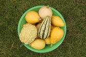 Decorative yellow pumpkins collected from a bush in a light-green basket for onward transportation — Stock Photo