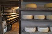 チーズ — ストック写真