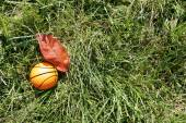Orange basketball on green grass — Photo