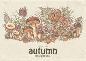 Image of autumn background with white mushrooms, chanterelles and oyster mushrooms — Stock Vector