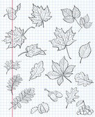 Set of autumn leaves, chestnuts, acorns and viburnum on a background of exercise book in a cage. black contour — Διανυσματικό Αρχείο