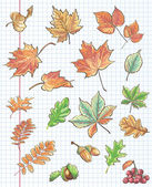 Et of autumn leaves, chestnuts, acorns and viburnum on a background of notebook sheet in a cage — Stockvector