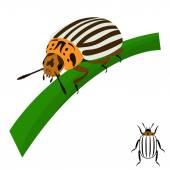 Colorado potato beetle sits on a stalk. — Stock Vector
