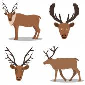 Deer and their head — Vector de stock