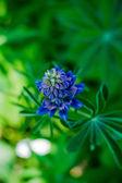голубая орхидея, изолированные на белом фоне — Стоковое фото