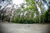 Road in magic dark forest — Stock Photo