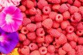 Raspberries and flowers — Stock Photo