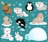 Arctic Animal Vector Set — Stock Vector