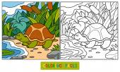 Coloring book (turtle) — Stock Vector