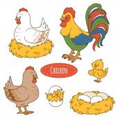 Set of cute farm animals and objects, vector family chicken — Stock Vector