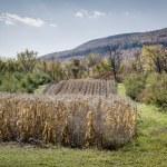 Autumn Cornfield — Stock Photo #52972833