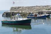 Lobster Boats in Lanes Cove, MA — Stok fotoğraf