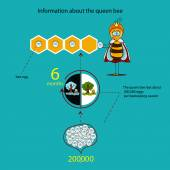 Information about the queen bee (seasons) — Vetor de Stock