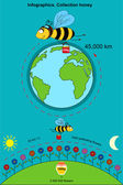 Infographics. Collection honey — Stock Vector
