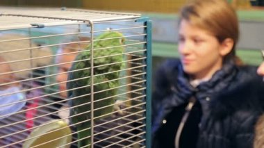 Animal shelter, girl looks at the cage with a parrot — Stock Video